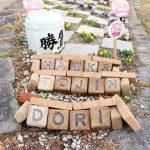 ホークスとうじん通りガーデンの中に「HAWKS TOJIN DORI」と書かれた石があります。奥にかけて花壇となっていて黄色、ピンク、紫色の花が咲いています。