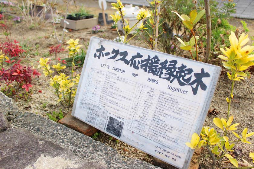 ホークスとうじん通りガーデンの花壇の中に設置されている「ホークス応援縁起木」の説明版です。