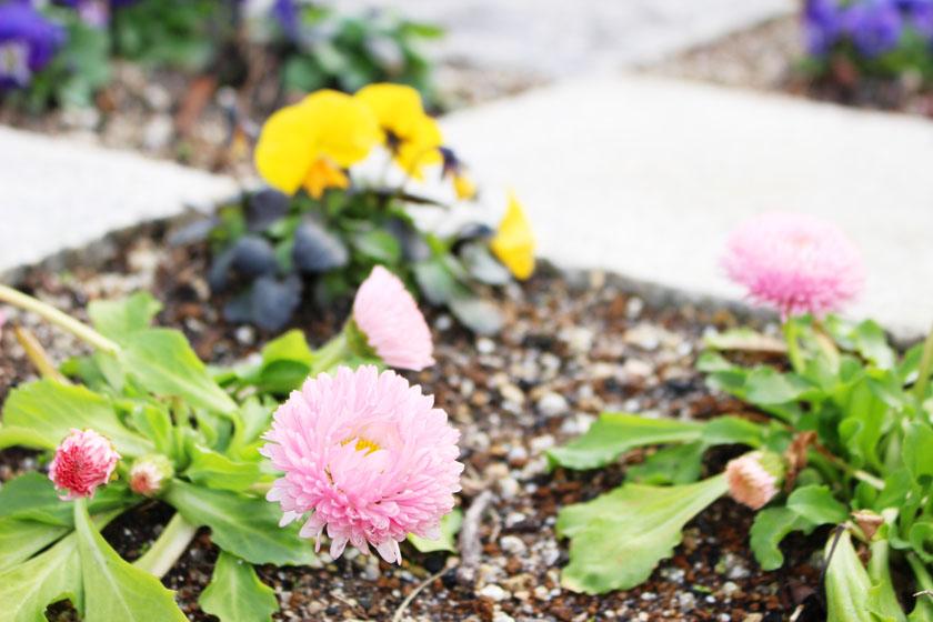 ホークスとうじん通りガーデンに咲いているお花です。ピンク、黄などの色をした花が植えられています。