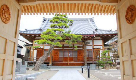 唐人町にある浄慶寺です。山門の開かれた木製の扉から本堂を臨みます。本堂の前に松の木がななめにのびています。