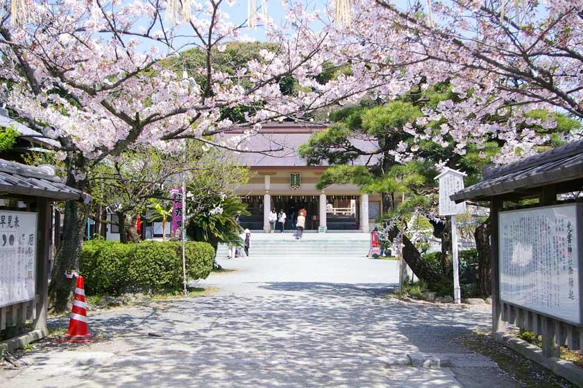 福岡市の西公園にある光雲神社です。満開の桜が両側に咲き、奥には本殿があります。