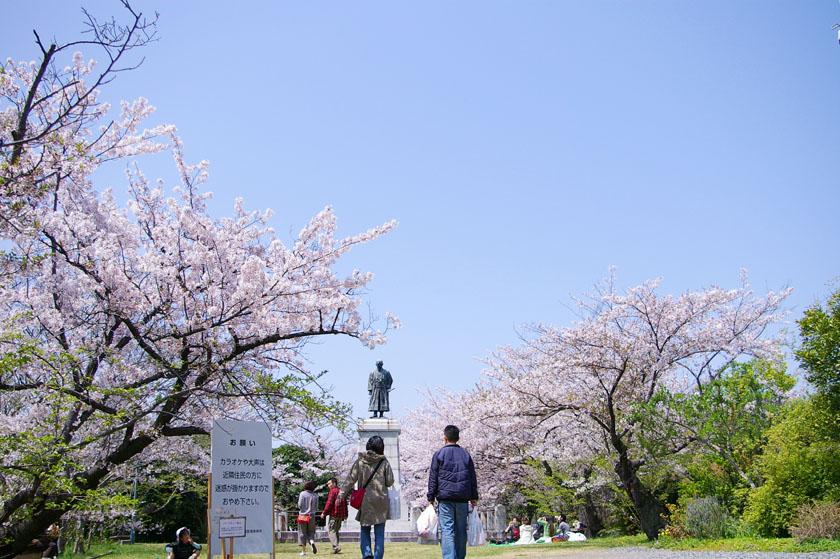 福岡市の西公園です。中央に平野二郎國臣の銅像があります。銅像の両側は満開の桜です。