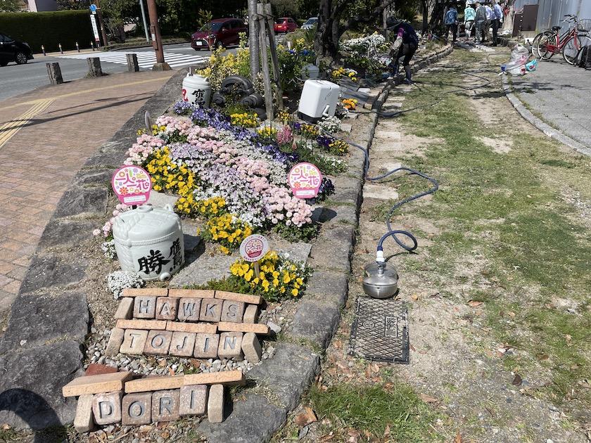 ホークスとうじん通りガーデンの全景です。手前にHAWKS TOJIN DORIと書かれた石があり、奥にかけて花壇となっていて黄色、白、ピンク、紫色の花が咲いています。