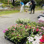 ホークスとうじん通りガーデンで花植え、草刈をする当仁地域のみなさん。手前にこれから植える花の苗があります